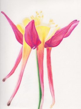 Flower, colored pencil, $40.00