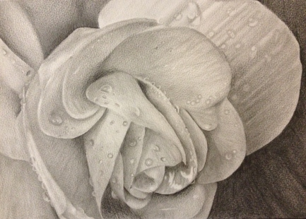 Rose, pencil, **SOLD**