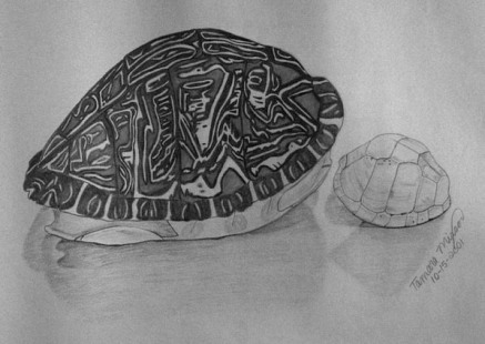 Turtle Shells, pencil, $45.00