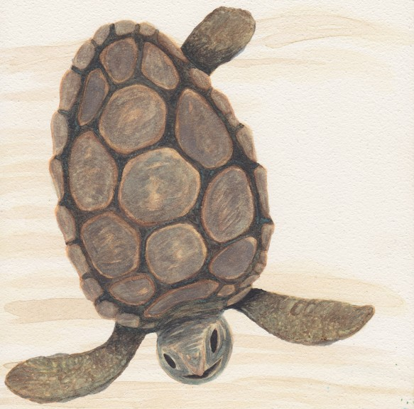 Turtle, watercolor, $40.00