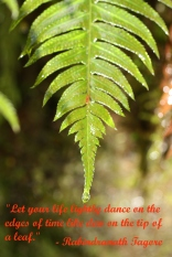 Leaf dew drop with Rabindranath Tagore quote