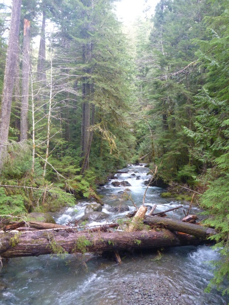 Lower Big Quilcene River, Olympic National Forest