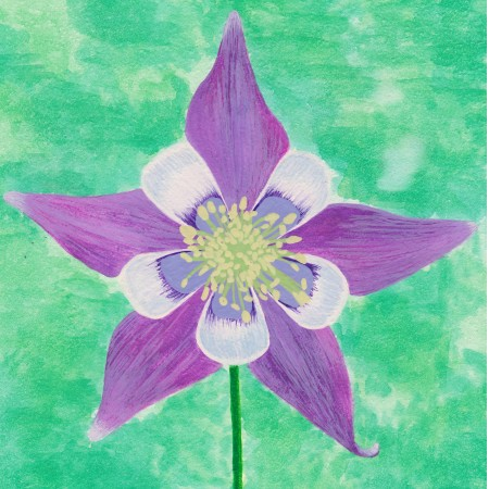 Colorful Columbine, watercolor on claybord