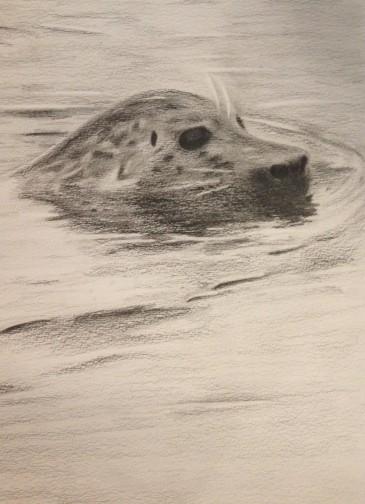 San Juan Seal, pencil, $75.00