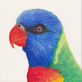 Lovely Lorikeet, watercolor, $90.00