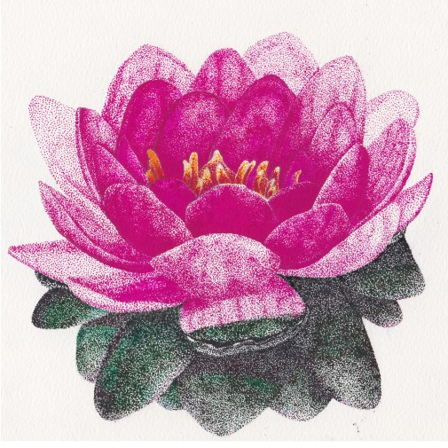 Water Lily, pen/ink, $75.00