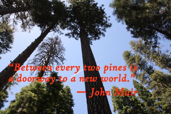 Wawona Mariposa Grove, Yosemite National Park
