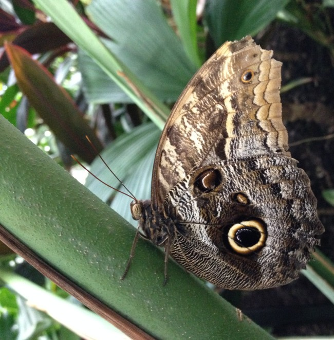Butterfly at Moody Gardens, Galveston, TX