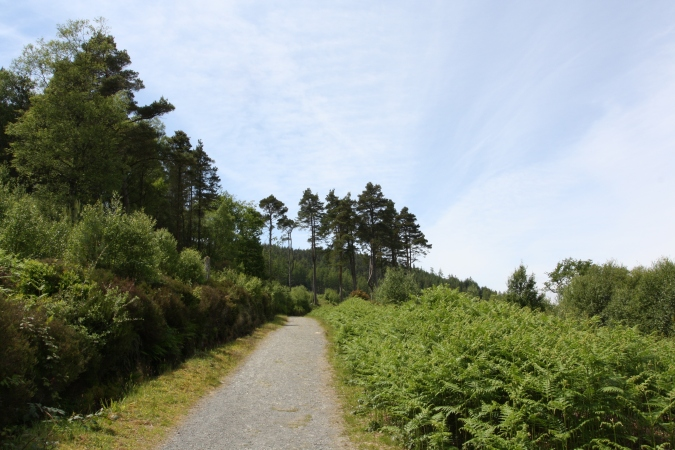 Derrybawn trail, Glendalough Valley, Wicklow Mountains National Park, Ireland