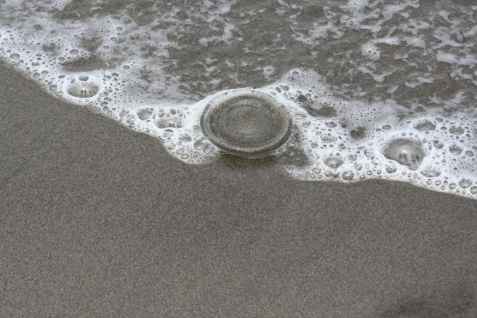 A jellyfish on the beach at Fort Stevens State Park, Oregon
