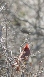 Cardinal, Texas Hill Country