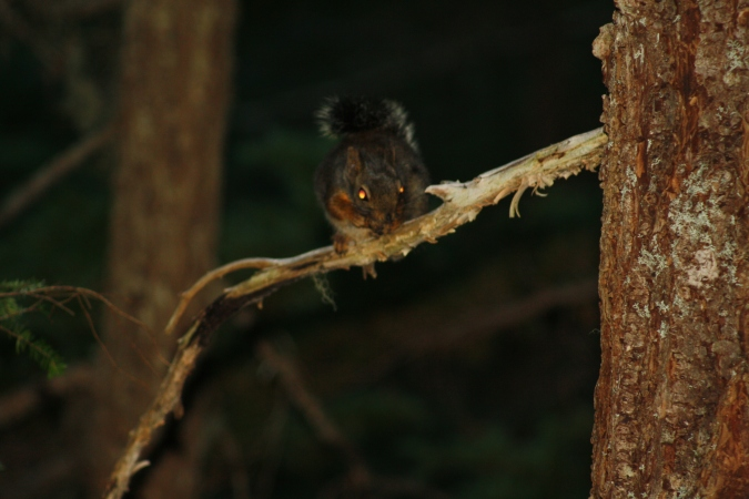 A squirrel along the trail to Rainbow Lake, Snoqualmie Pass, WA