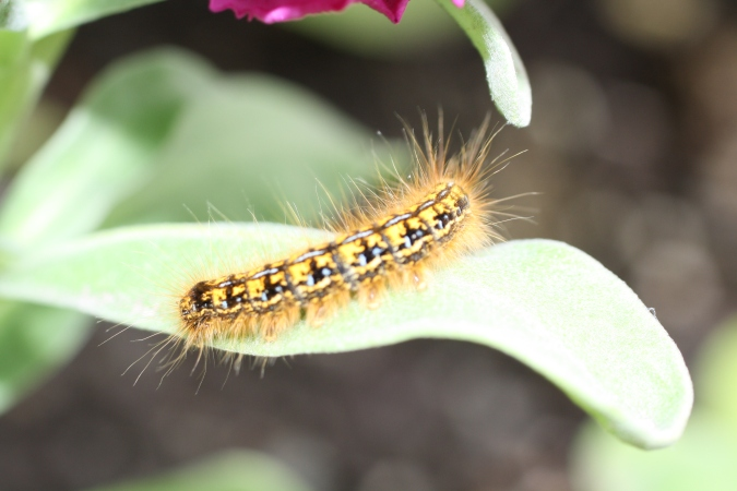 A caterpillar rests on a leaf